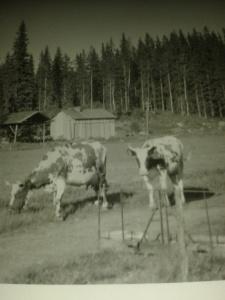 Hallon och Leja, 1962