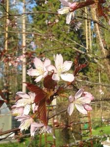 Blommor och blivande blad