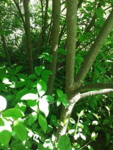 Stam på stam i buskaget