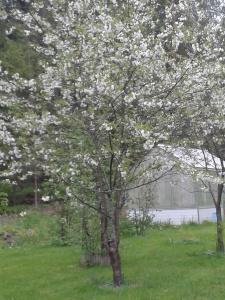 Rik blomning
