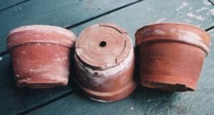 OrdOdlarens favoritkruka, specialforad enligt en odlares önskemål av pappa och smeden i grannsocknen
