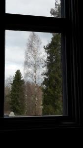 En annan ruta, träden får en ny dimension!