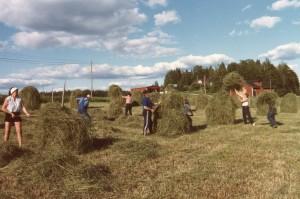 Full fart på talkofolket vid OrdOdlarens sista höbärgning 1985. Det blev prima hästhö från närmare 400 höstörar. OO bakom kameran.